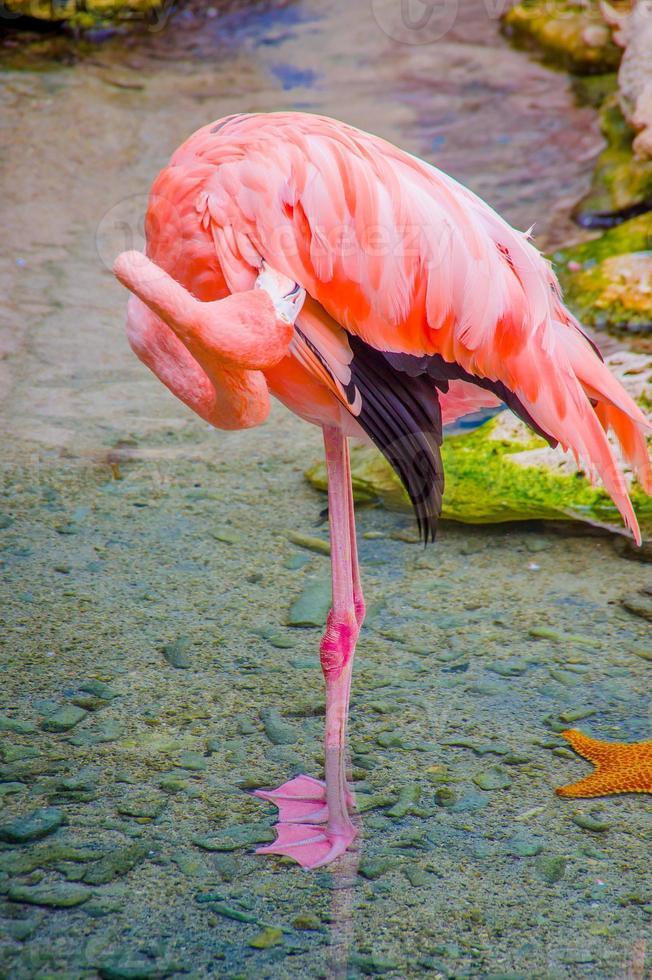roze flamingo's close-up, detail foto