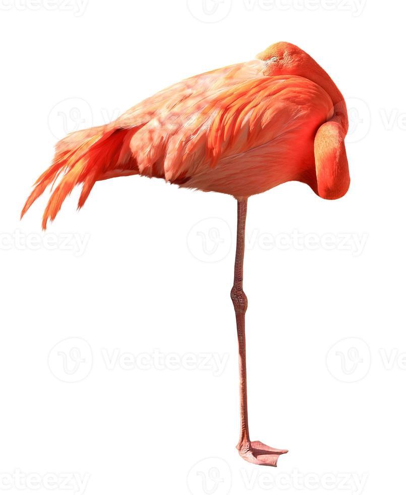 roze flamingo geïsoleerd op een witte achtergrond foto