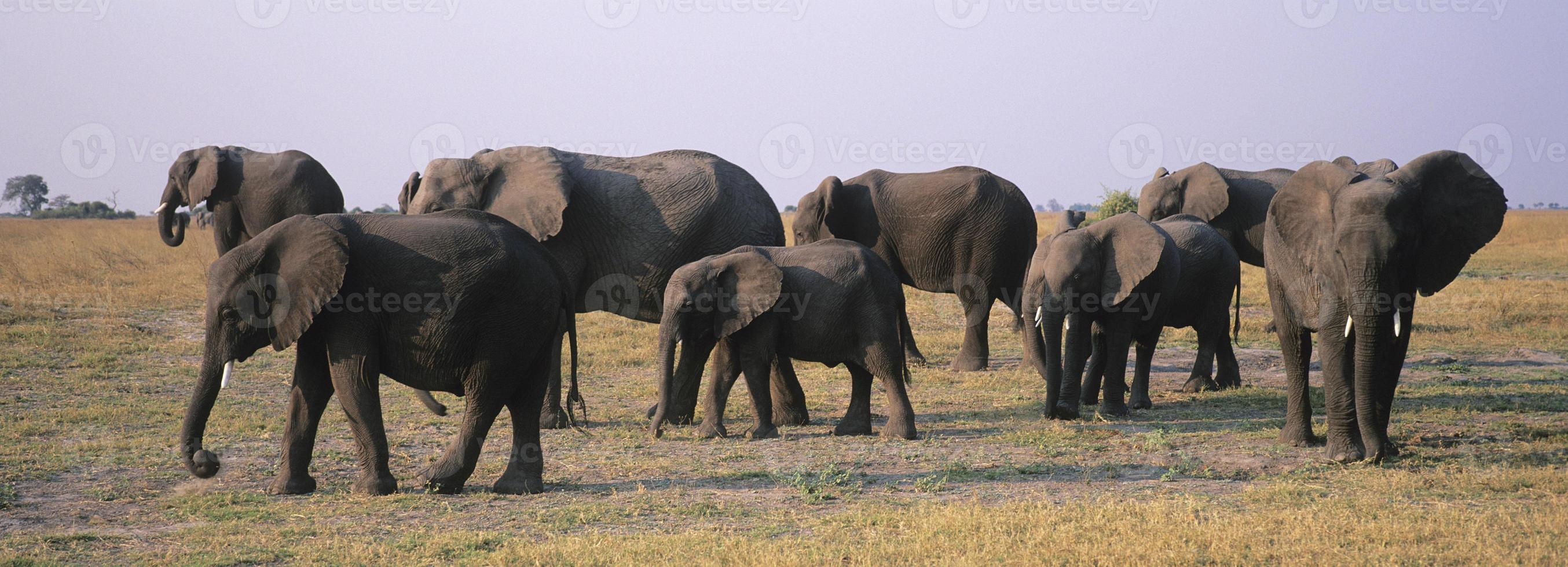 olifanten foto