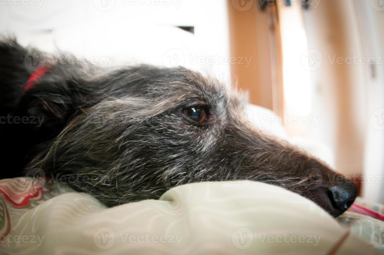 hond ontspannen foto