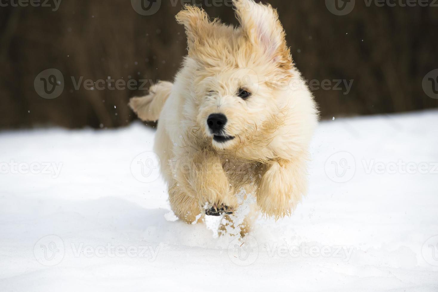 puppy in de sneeuw foto