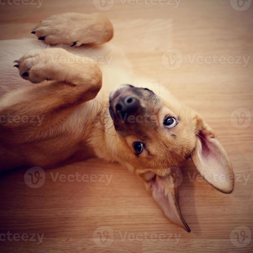 portret van een grappige puppy. foto