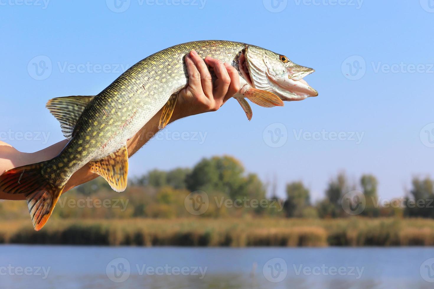 visvangst foto