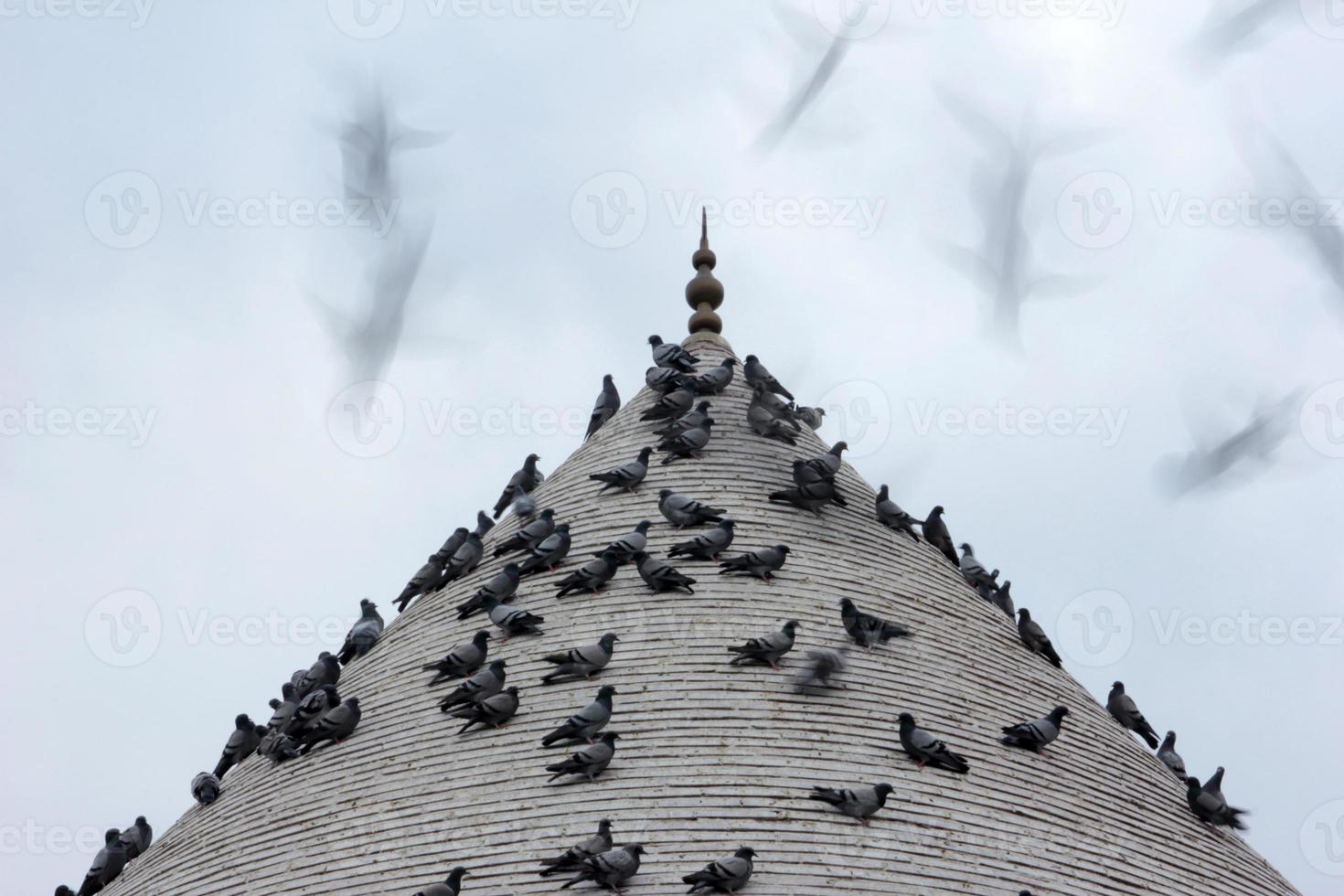 duif en minaret foto