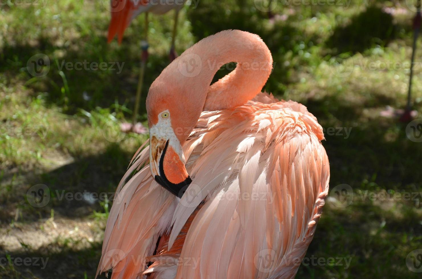 flamingo 1 foto