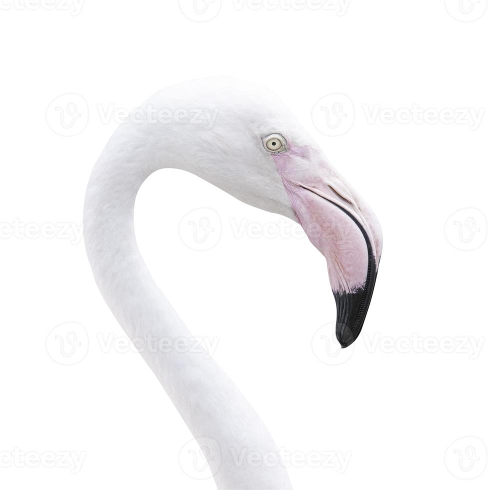 hoofd flamingo foto