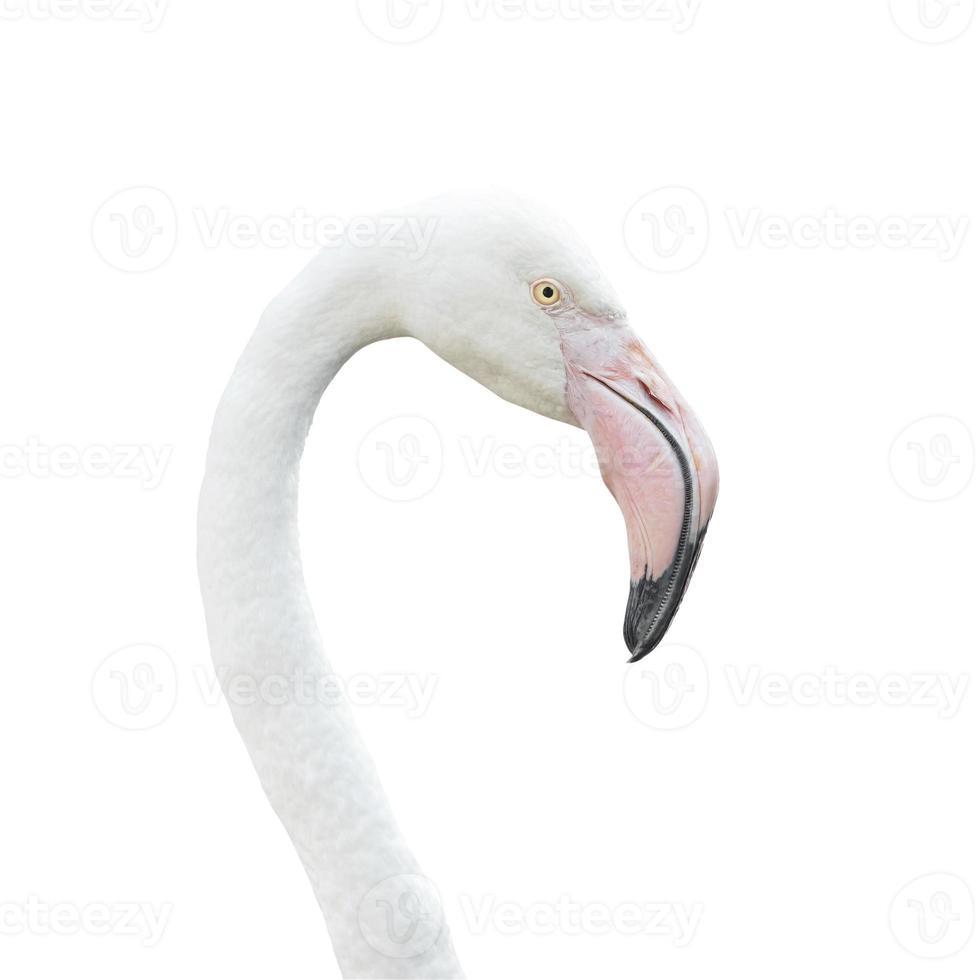hoofd flamingo geïsoleerd op een witte achtergrond. dit heeft knippen pa foto
