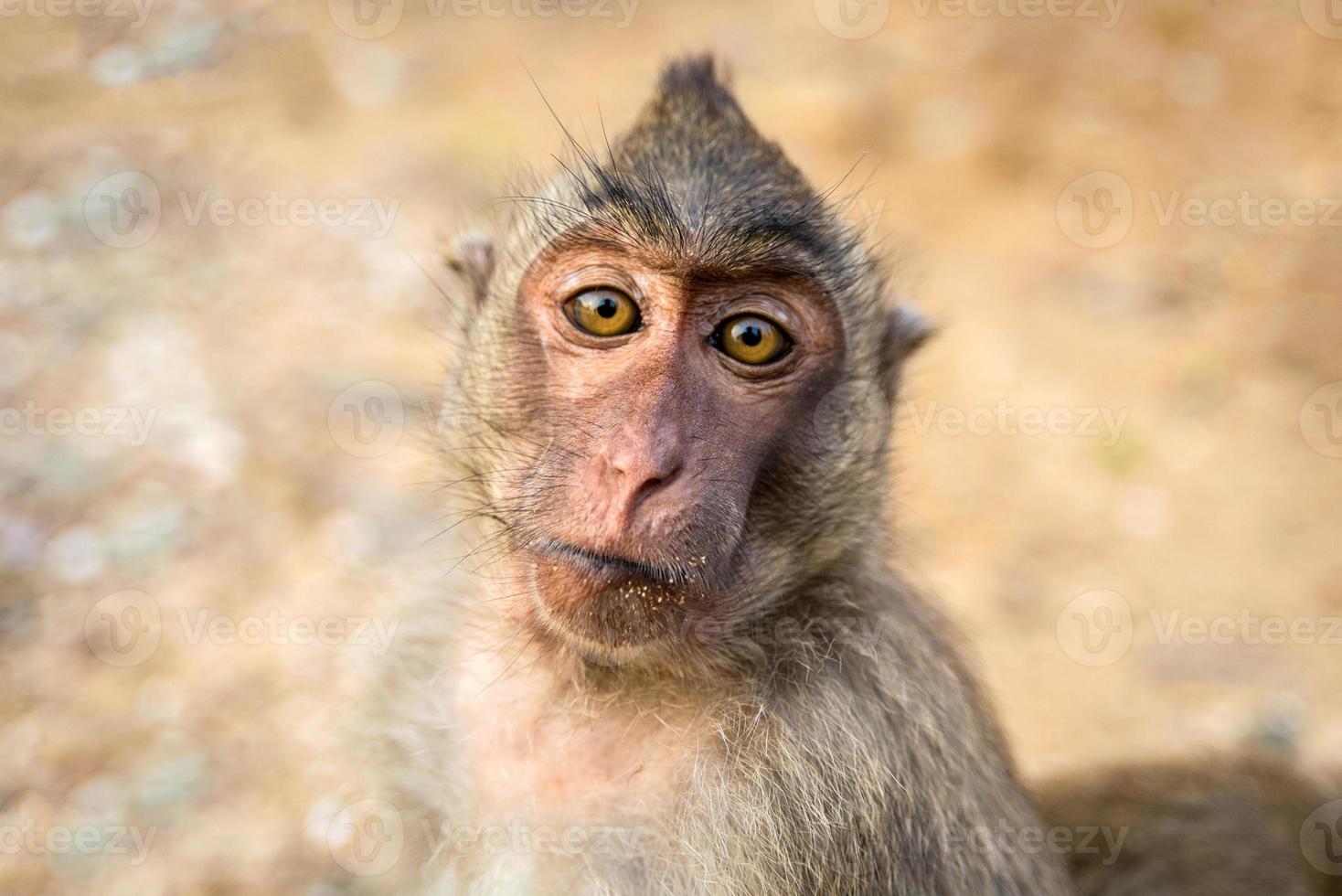 portret van aap foto
