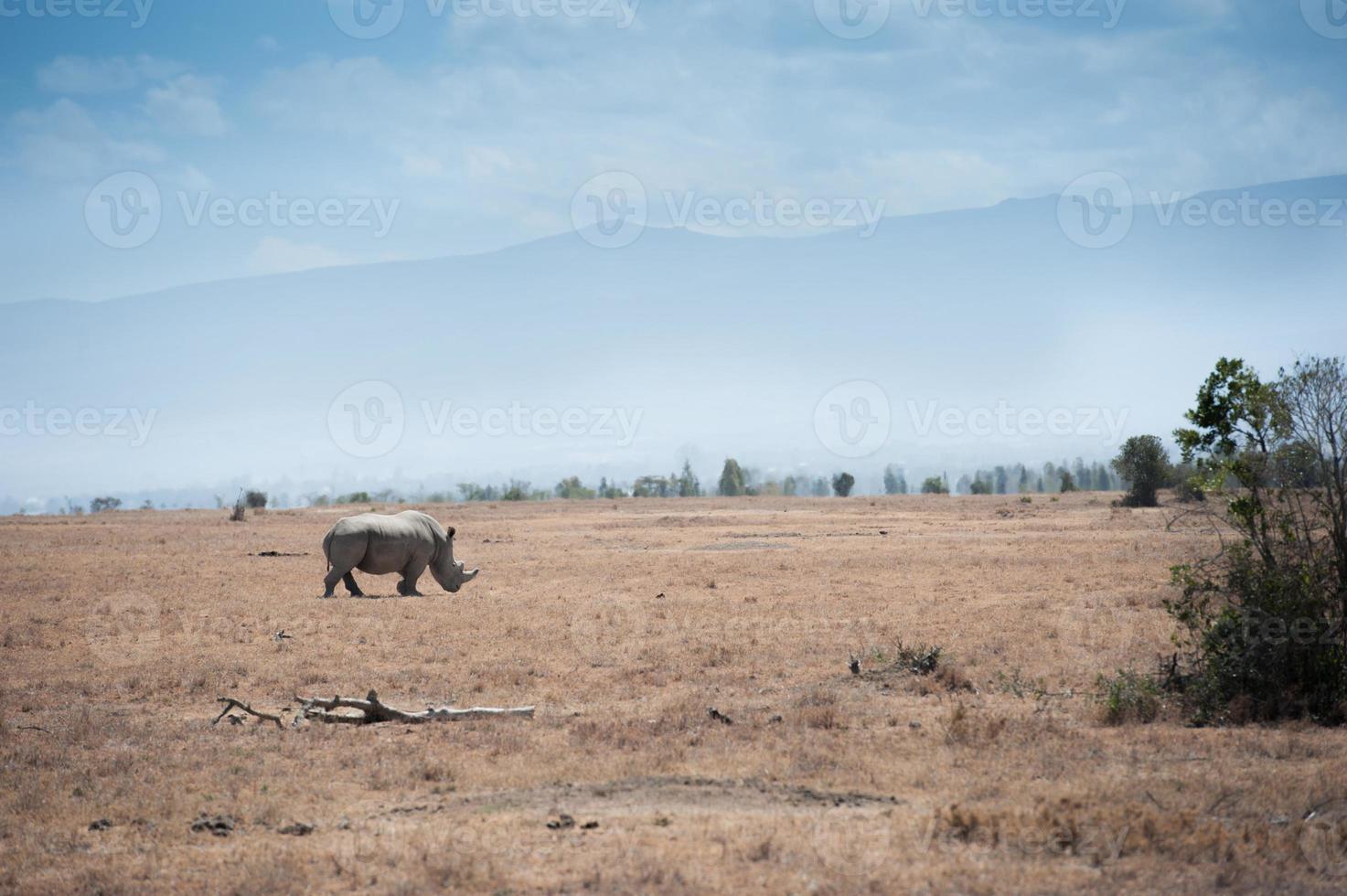 neushoorn foto