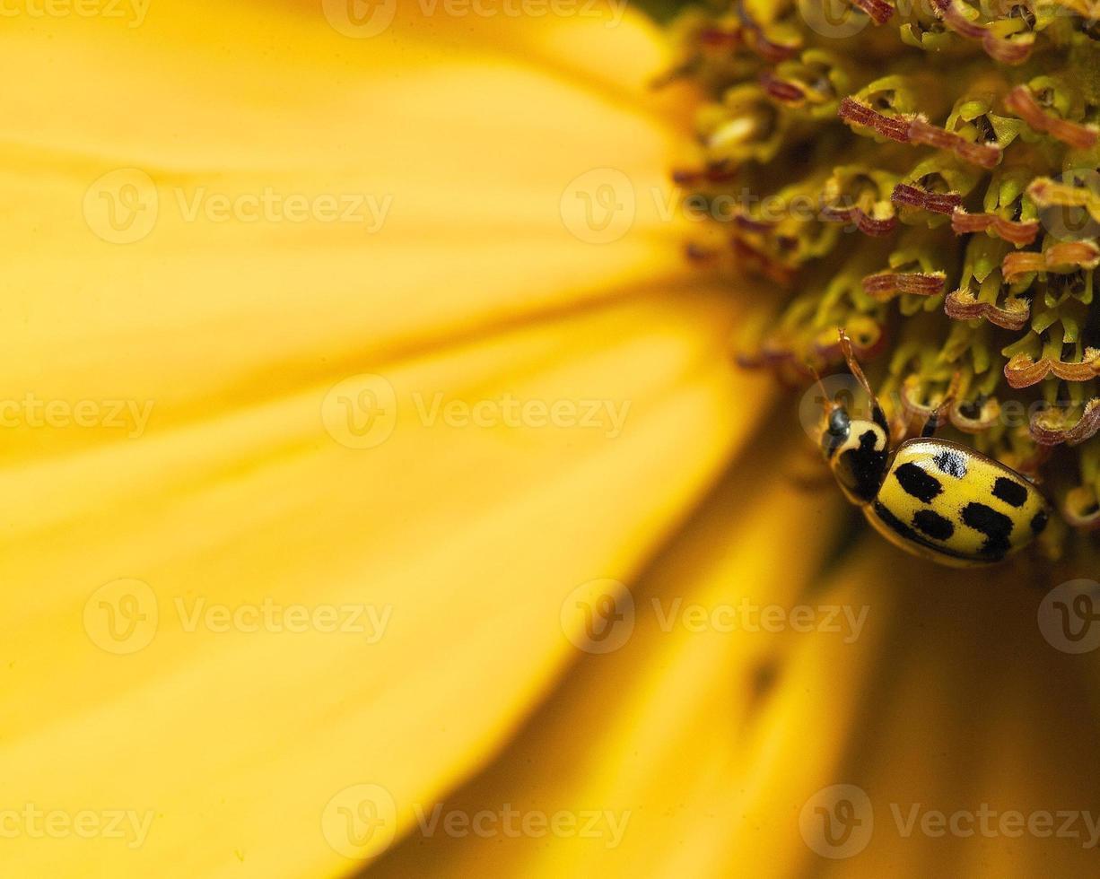 insecten foto