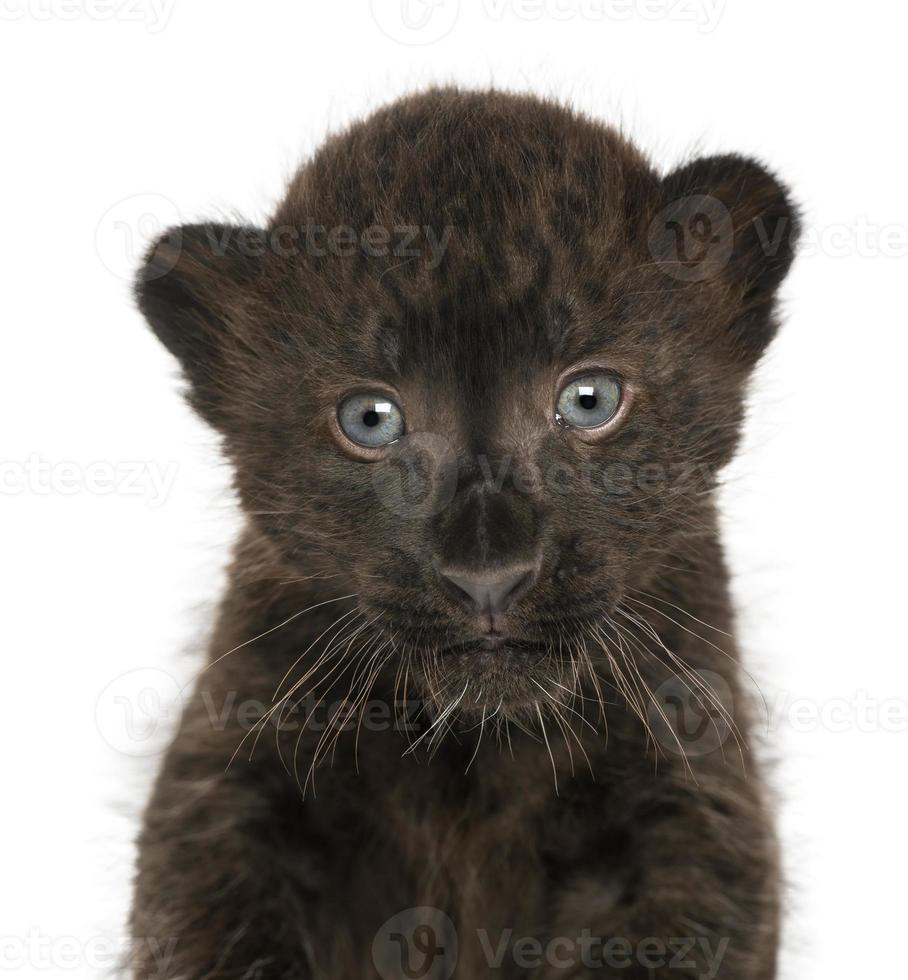 close-up van een zwarte luipaardwelp, 3 weken oud, geïsoleerd foto