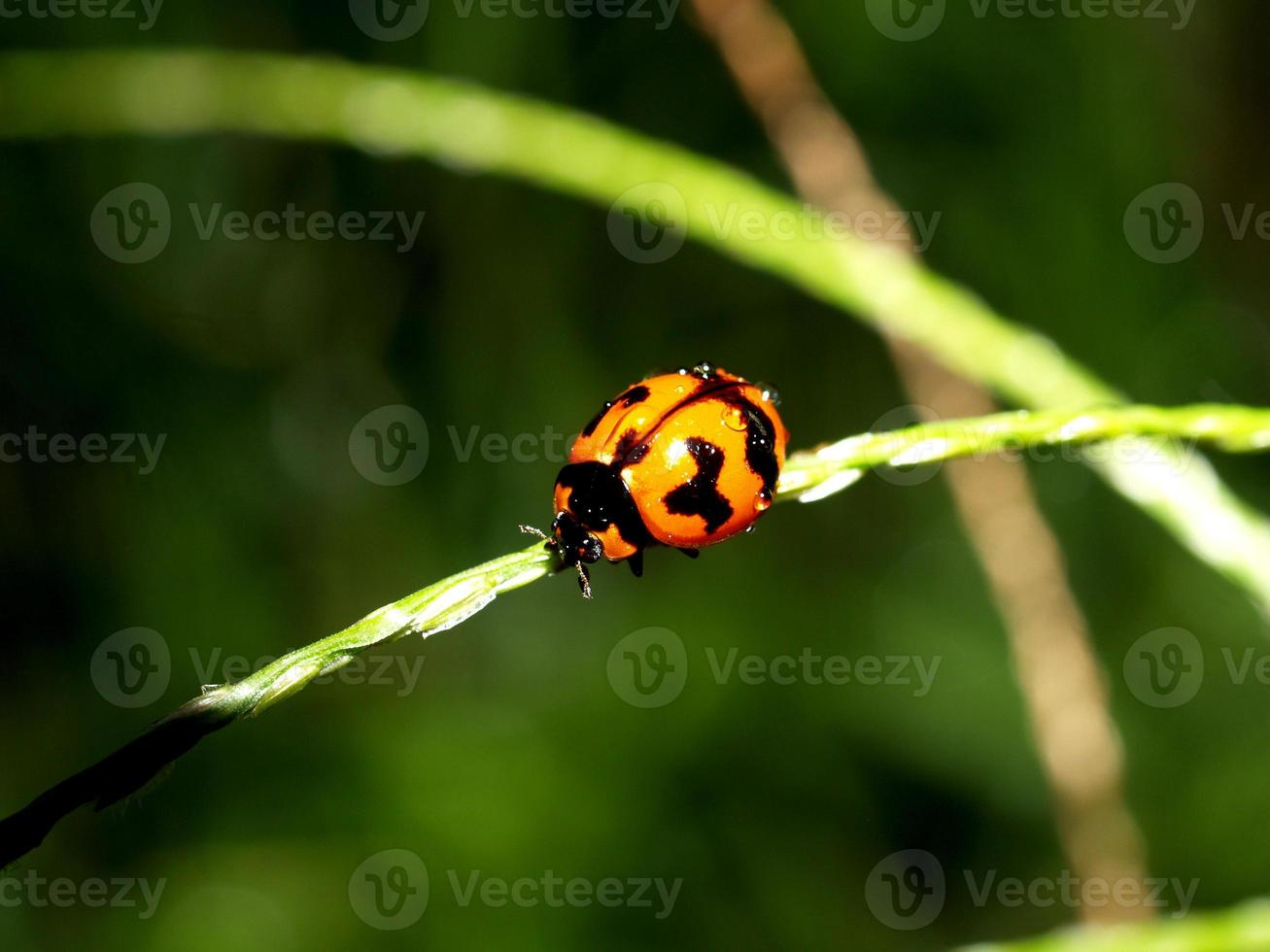 insectinsect in de natuur foto