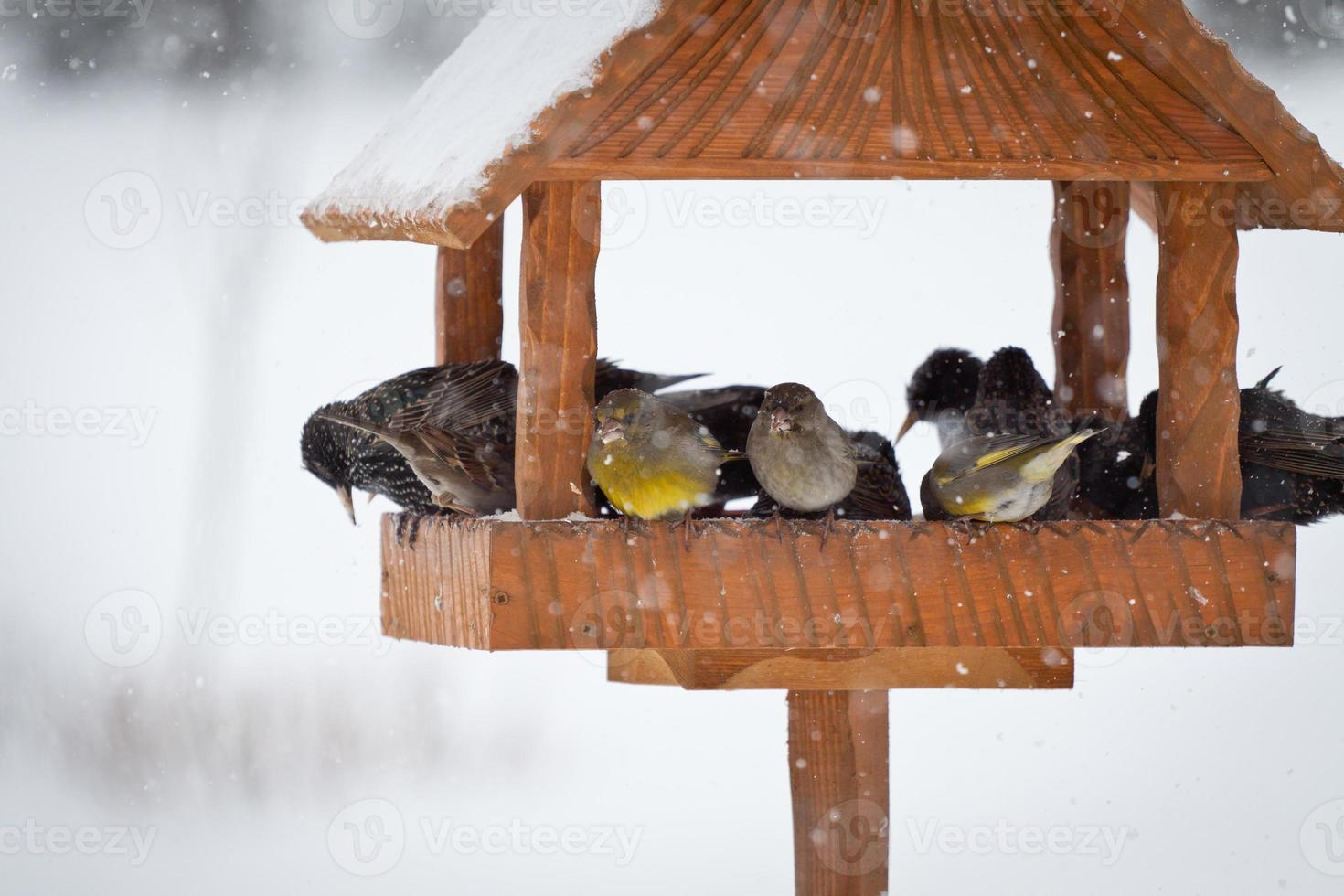 koolmees in de winter foto