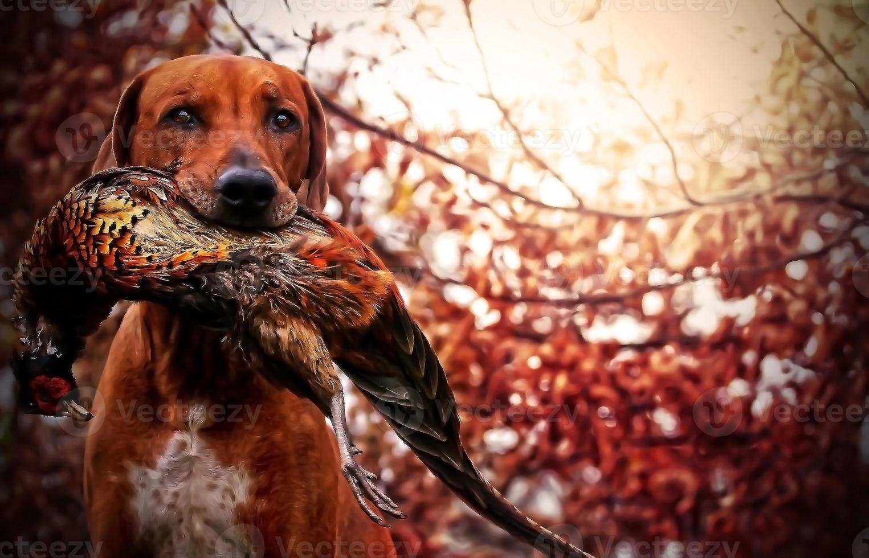 ridgeback hondenfazant foto