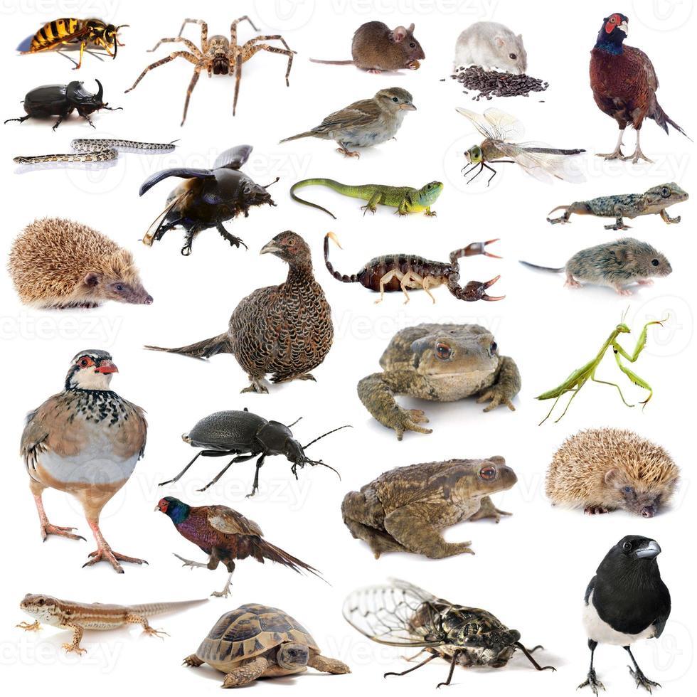 Europese dieren in het wild foto