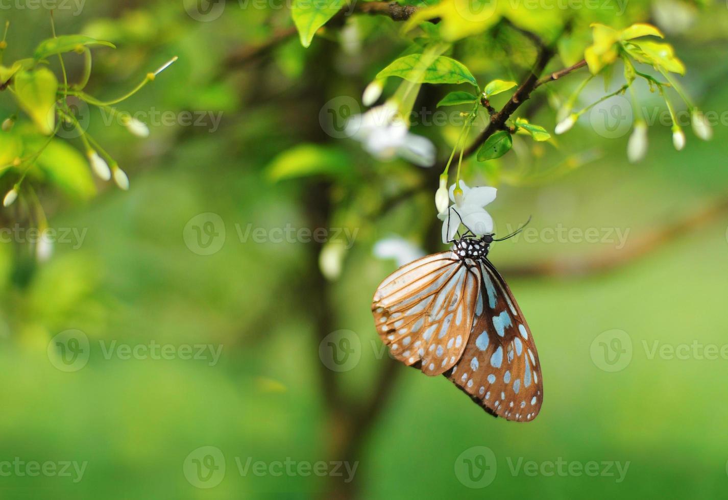kleurrijke vlinder die op een bloem rust foto