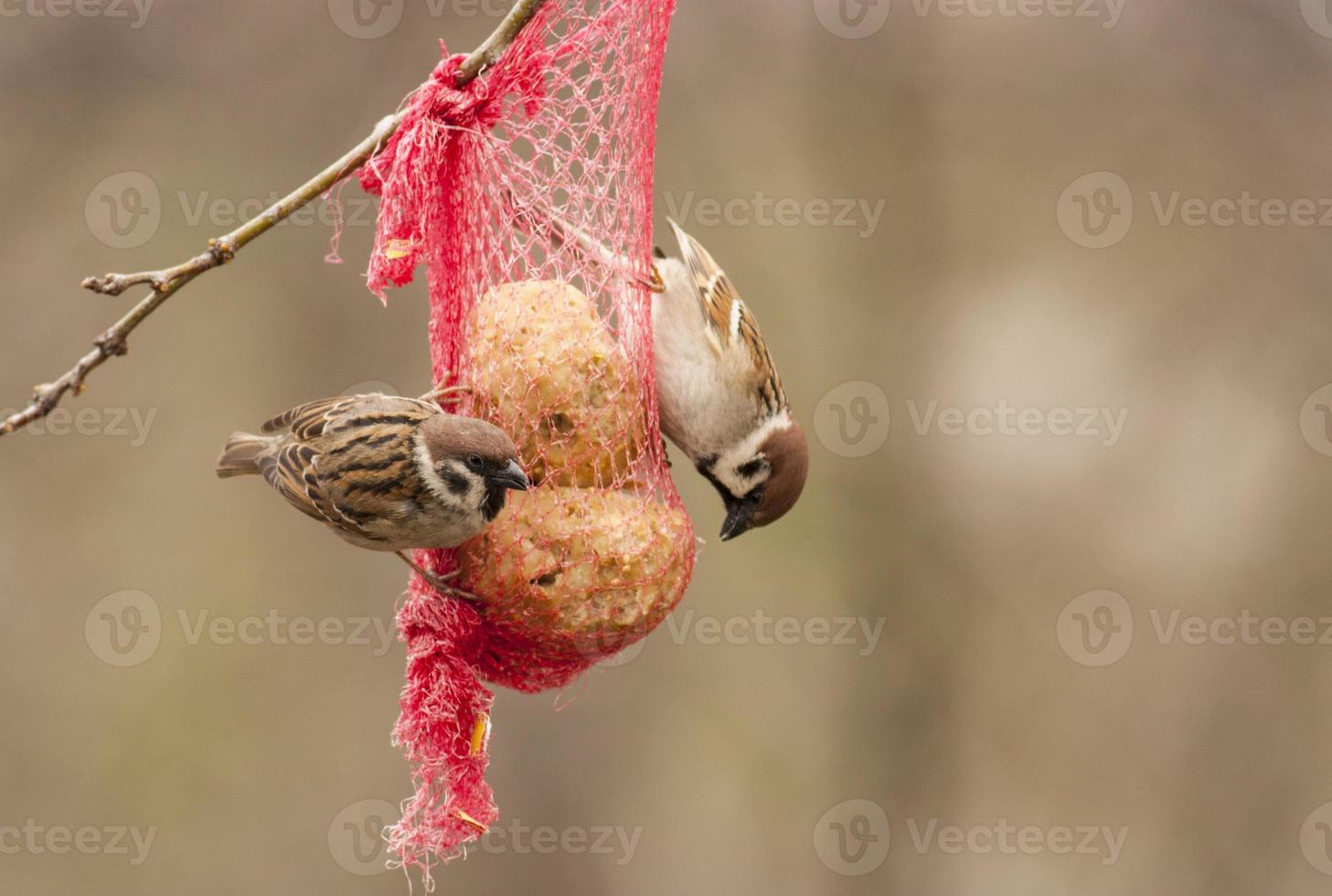 vogels op voedingszak foto