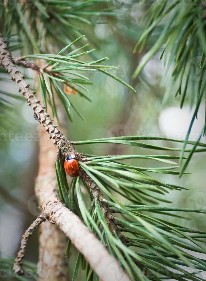 rode bug instelling op een boomtak foto