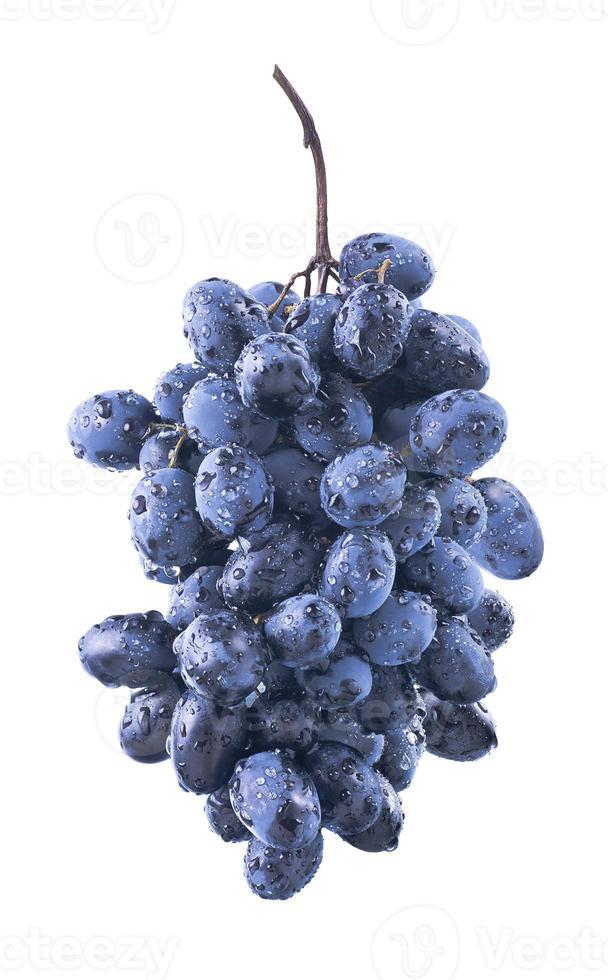 ovale natte blauwe druiven bos geïsoleerd op een witte achtergrond foto