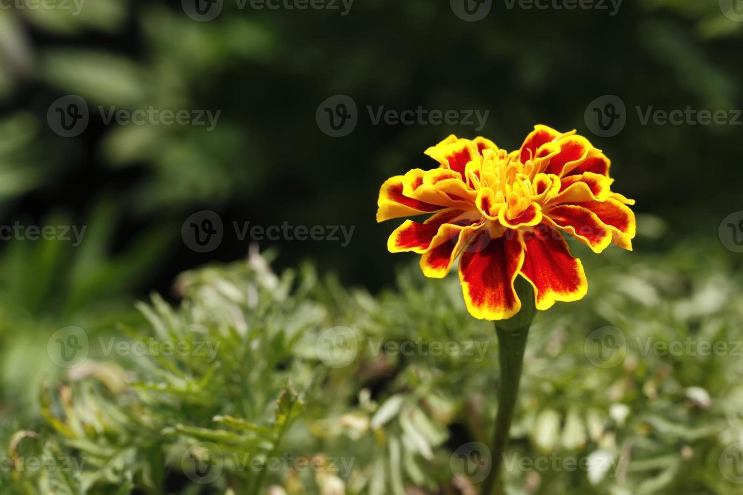 bloem foto