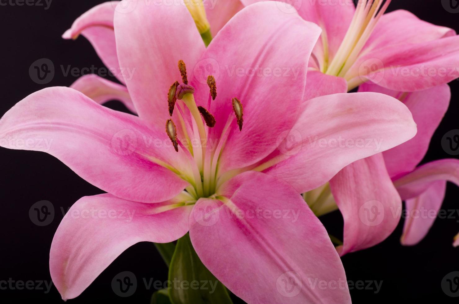 oosterse roze lelie foto