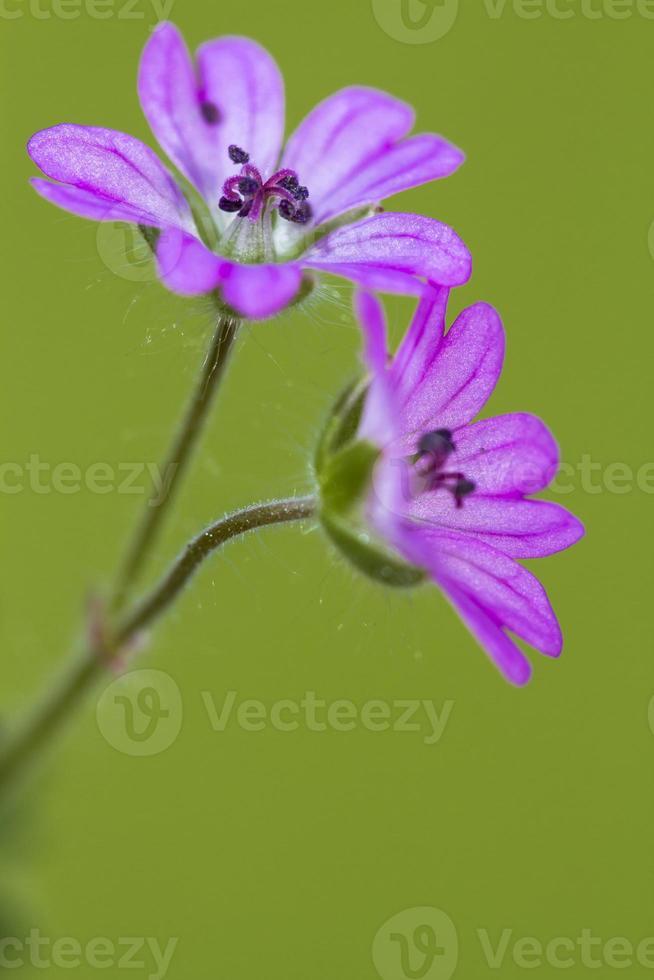 twee bloemen foto