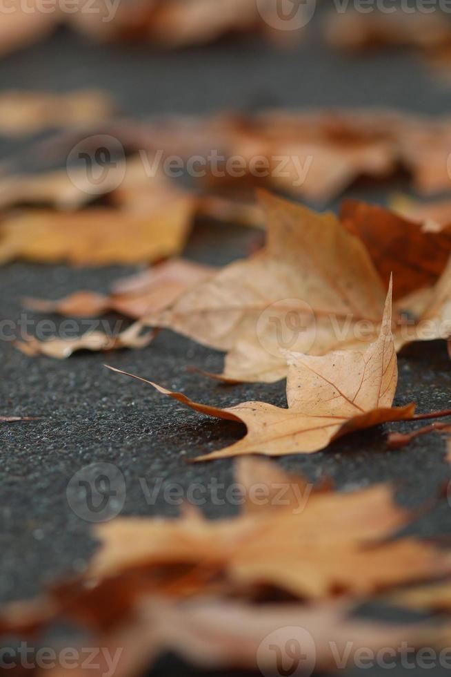 straat bladeren vallen foto
