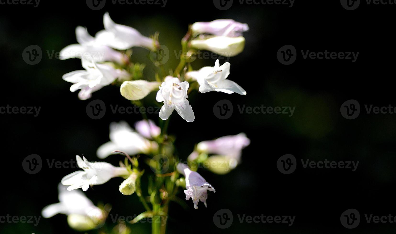 planten foto
