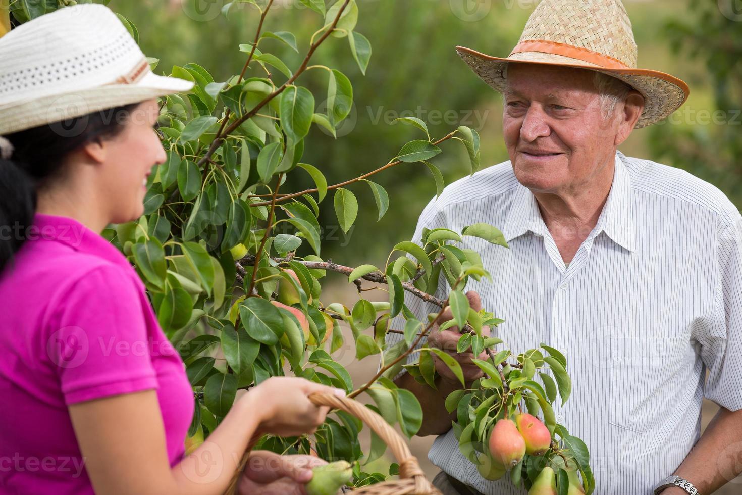 vrouw die een oudere man in de boomgaard helpt foto
