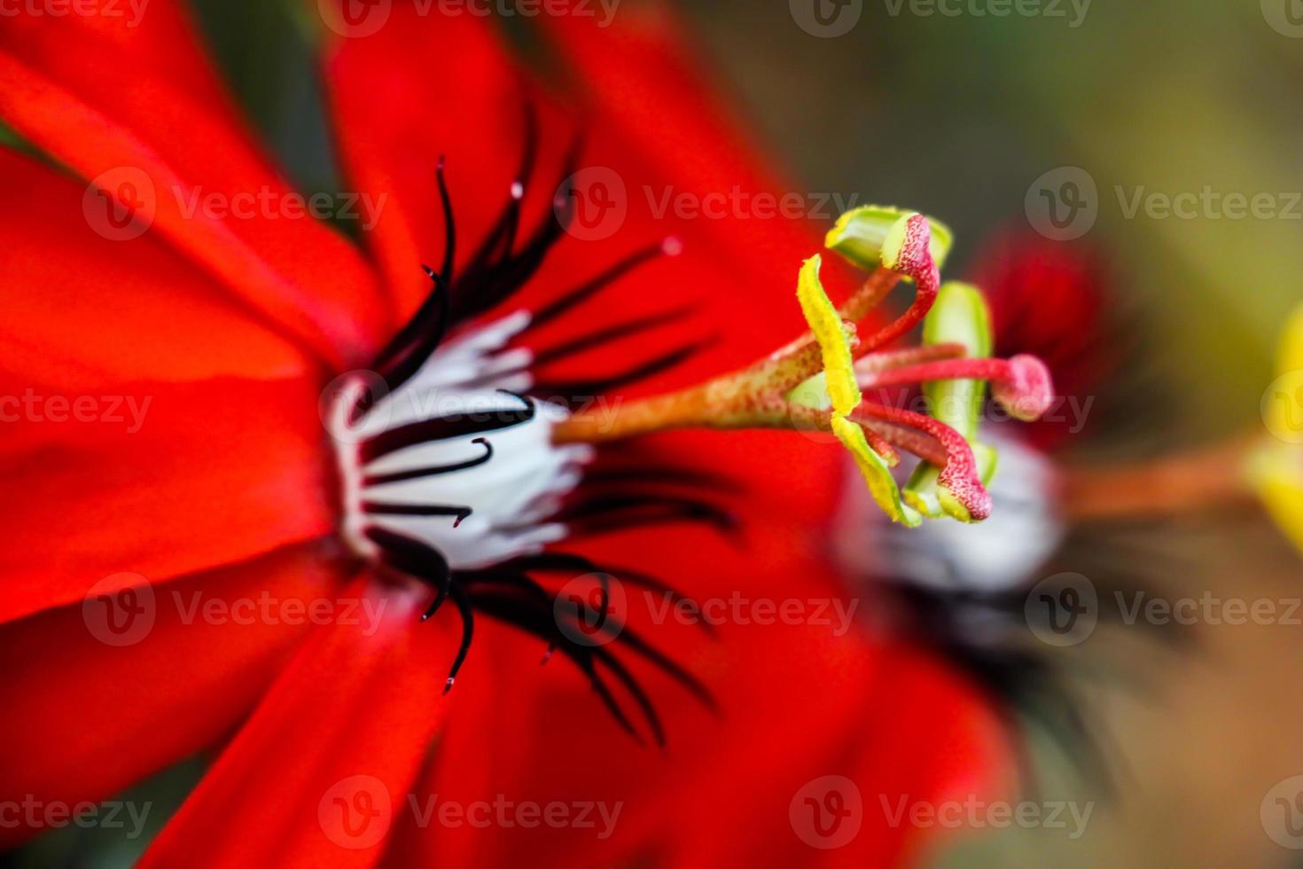 rode bloem foto