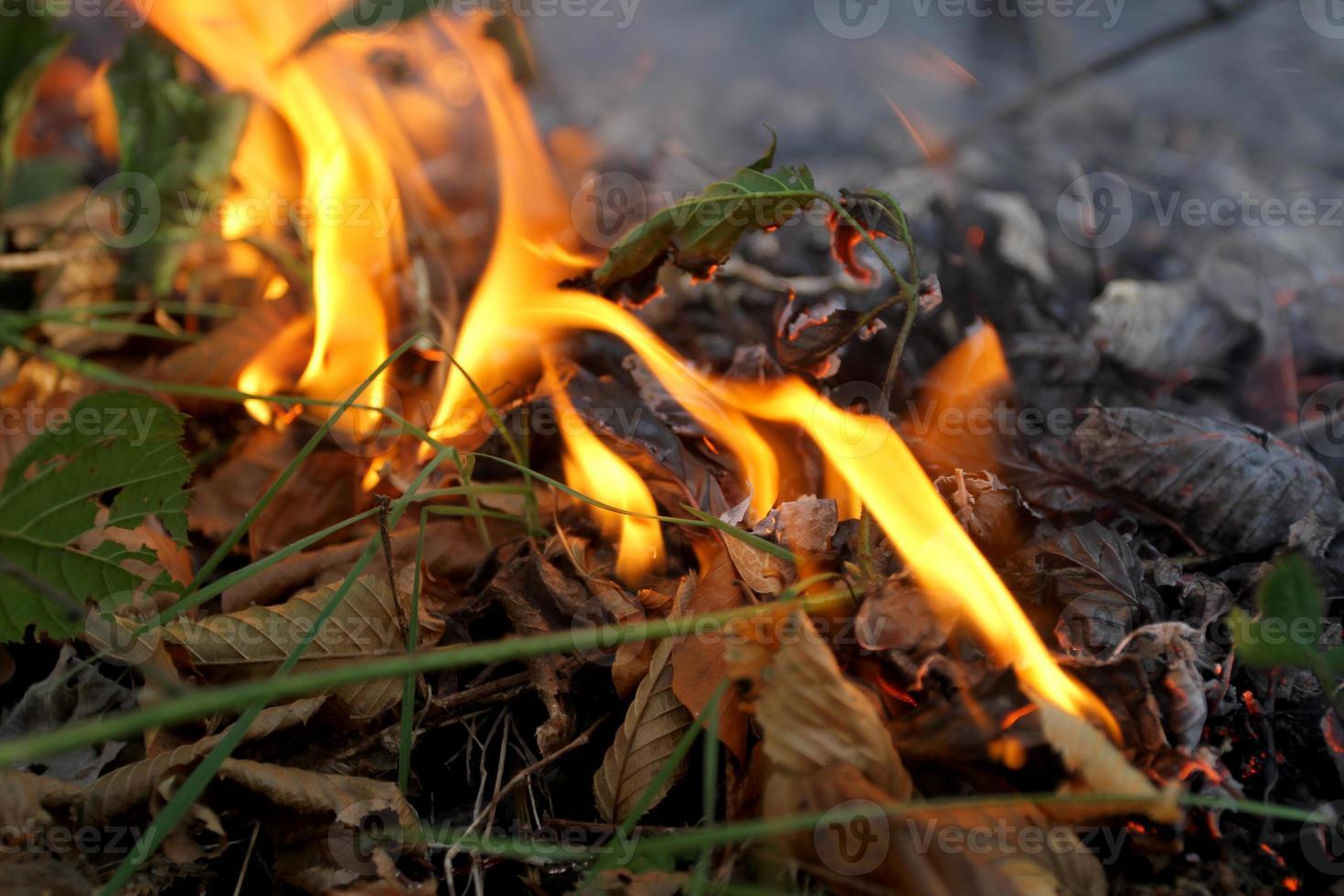 brand verlaat in het bos foto