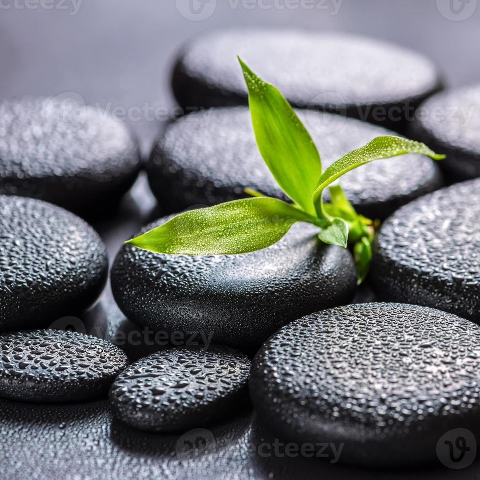 prachtige spa concept van groene tak bamboe foto
