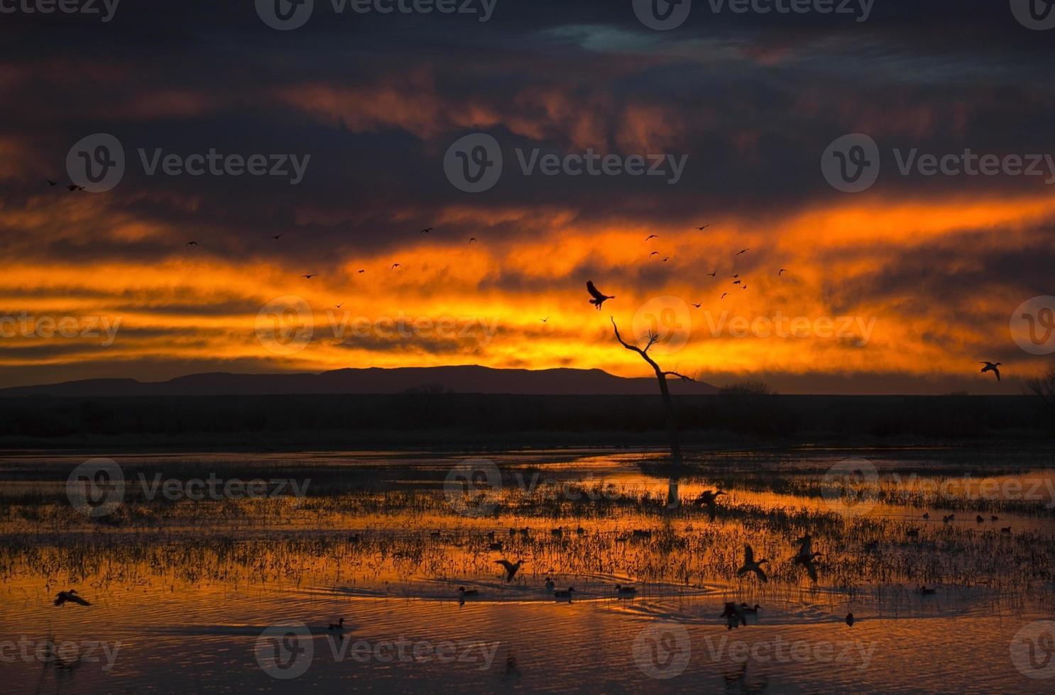 vurige adelaar zonsopgang foto