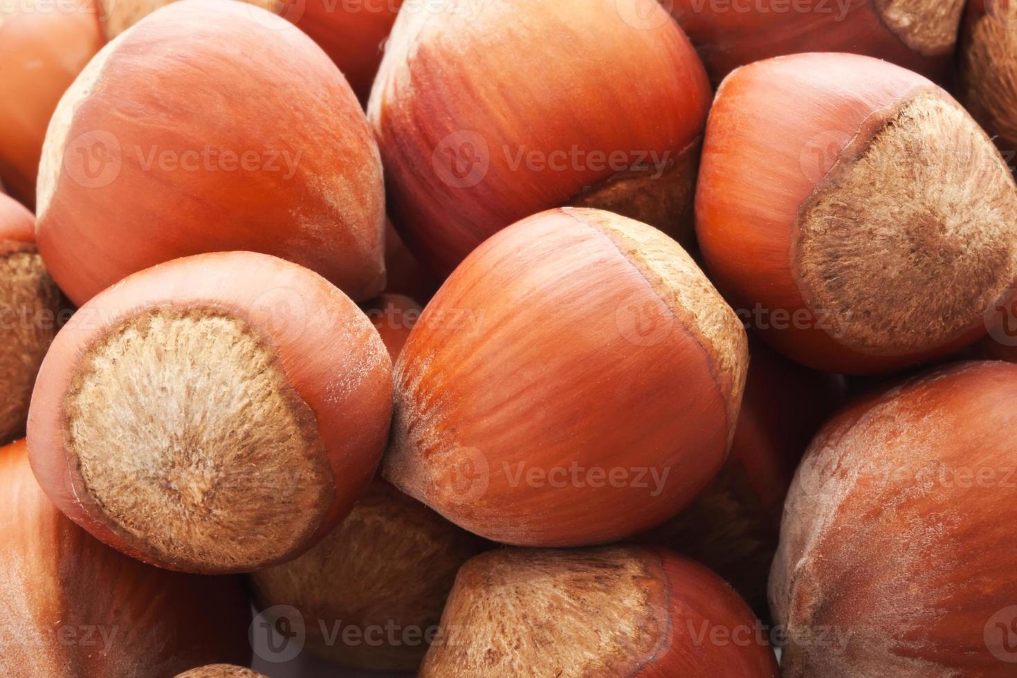 hazelnoten of hazelnoot foto