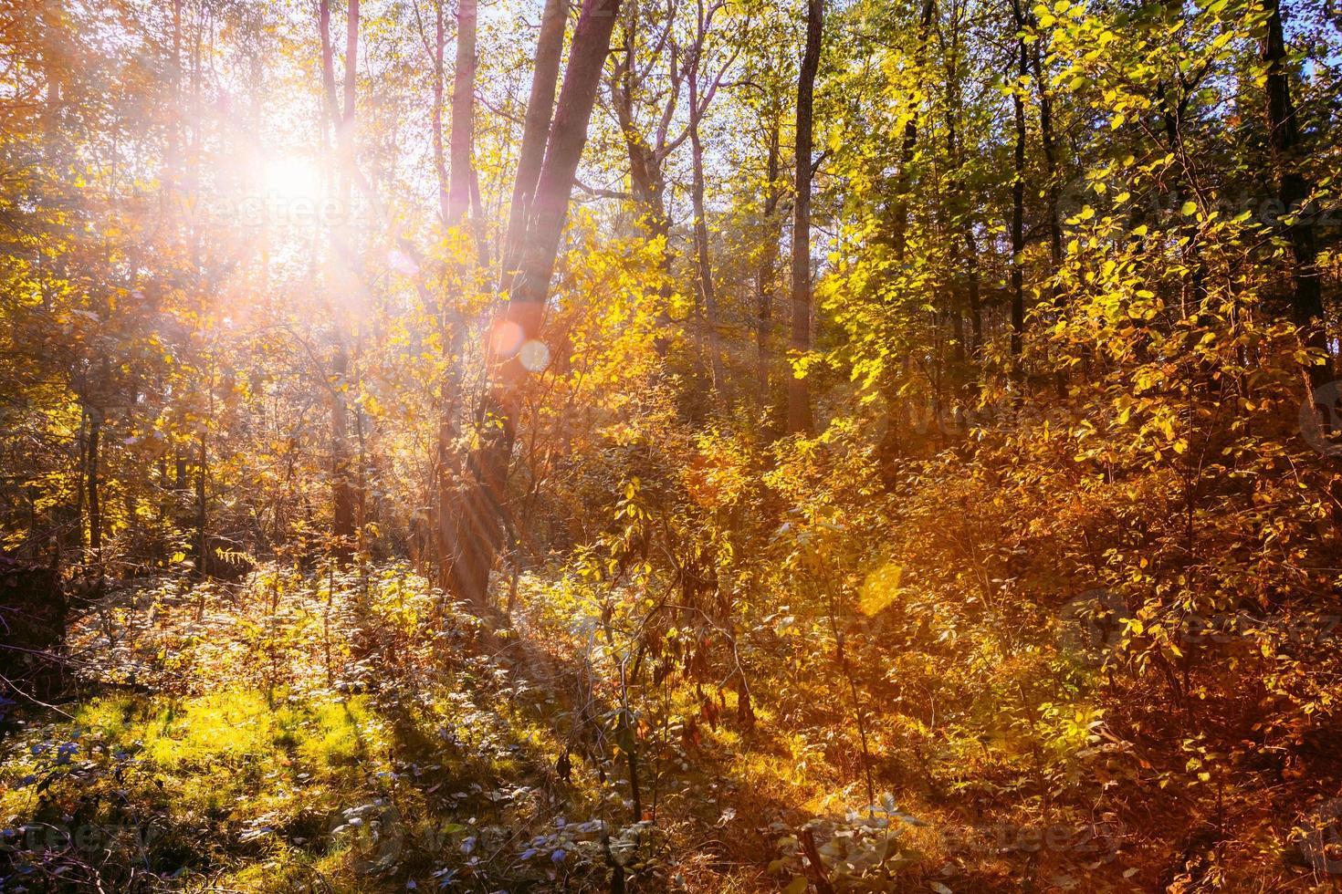 zonnige dag in de herfst zonnige bosbomen. natuurbossen, zonlicht foto