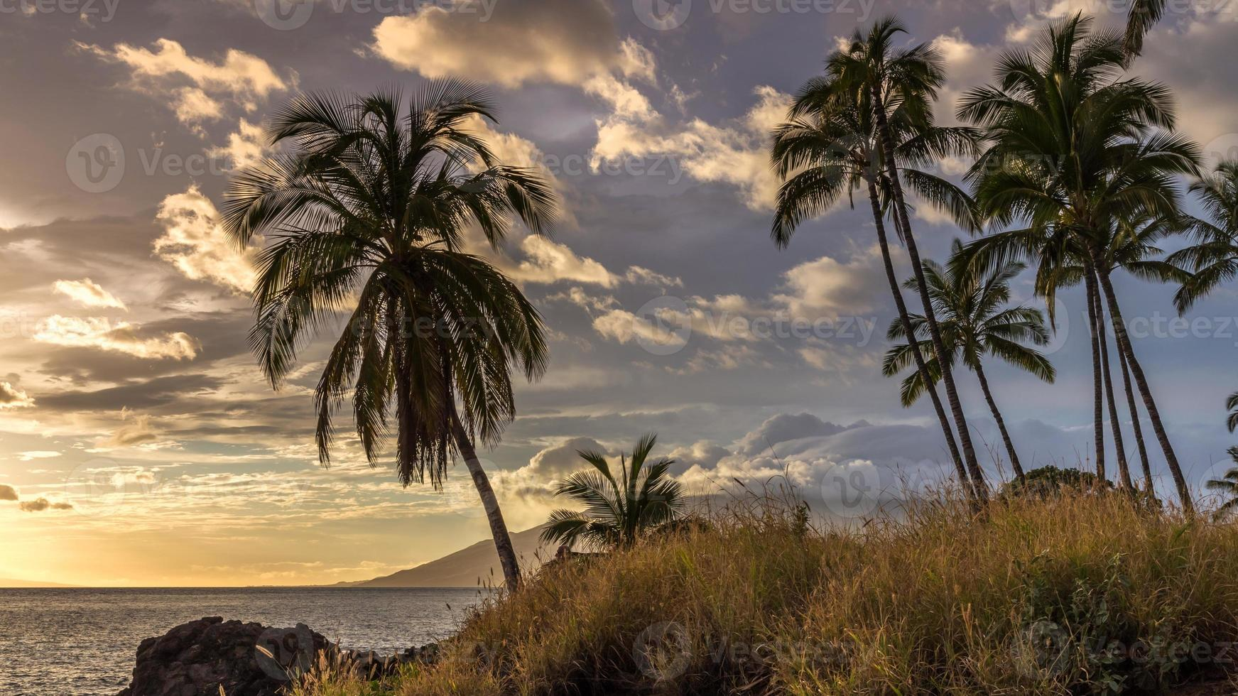 palmbomen bij zonsondergang op maui foto