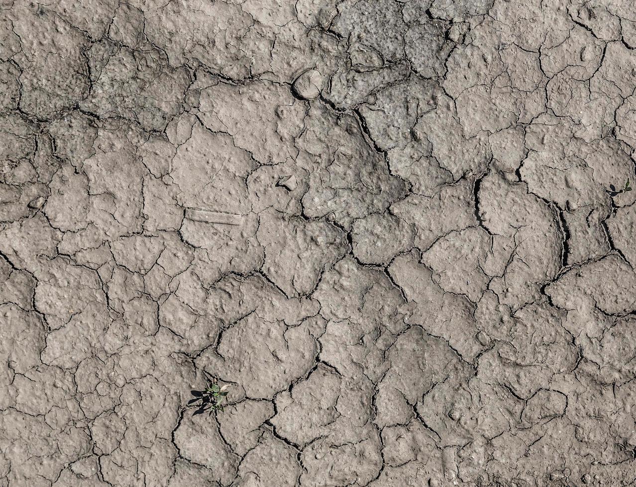 textuur droogte uitgedroogde aarde foto