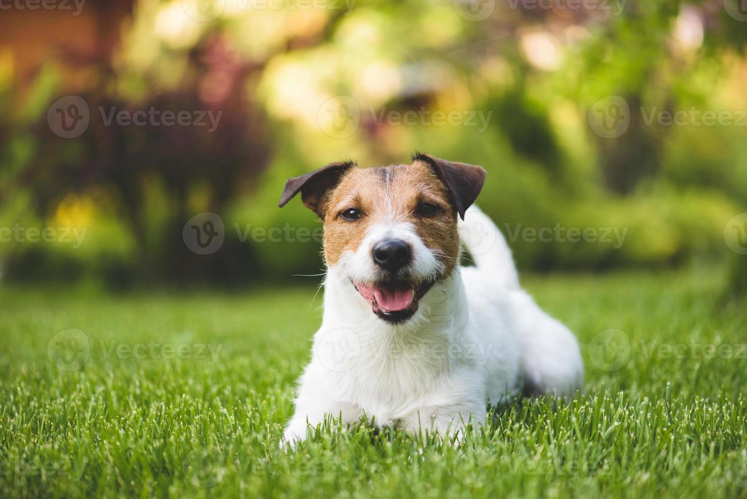 lachende hond op een gazon foto