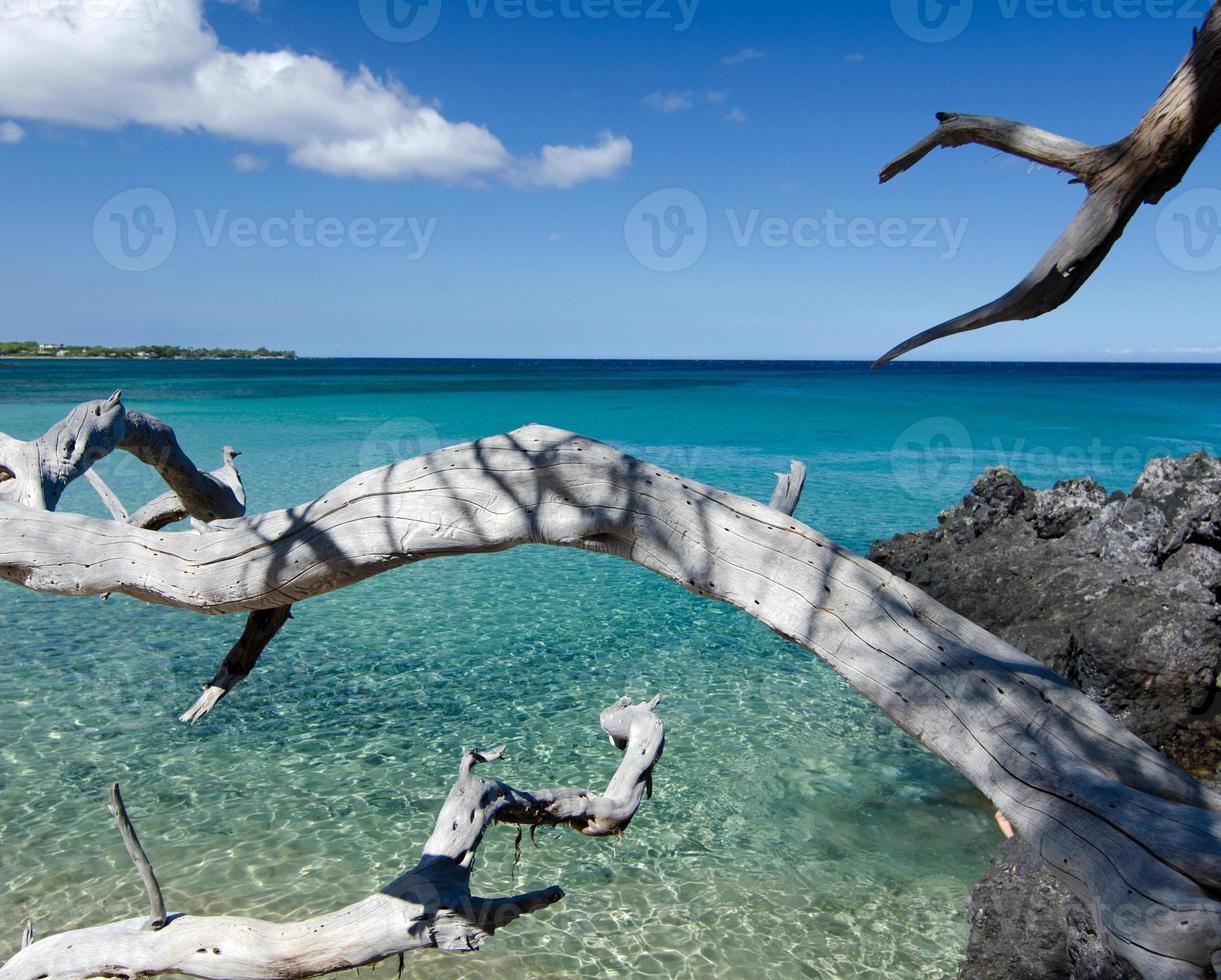 witte droge houten takken die lavastenen bereiken bij strand 69, foto