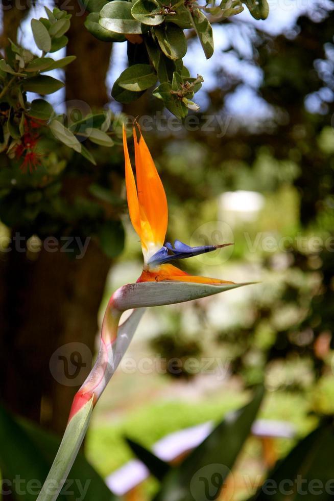 paradijsvogel foto