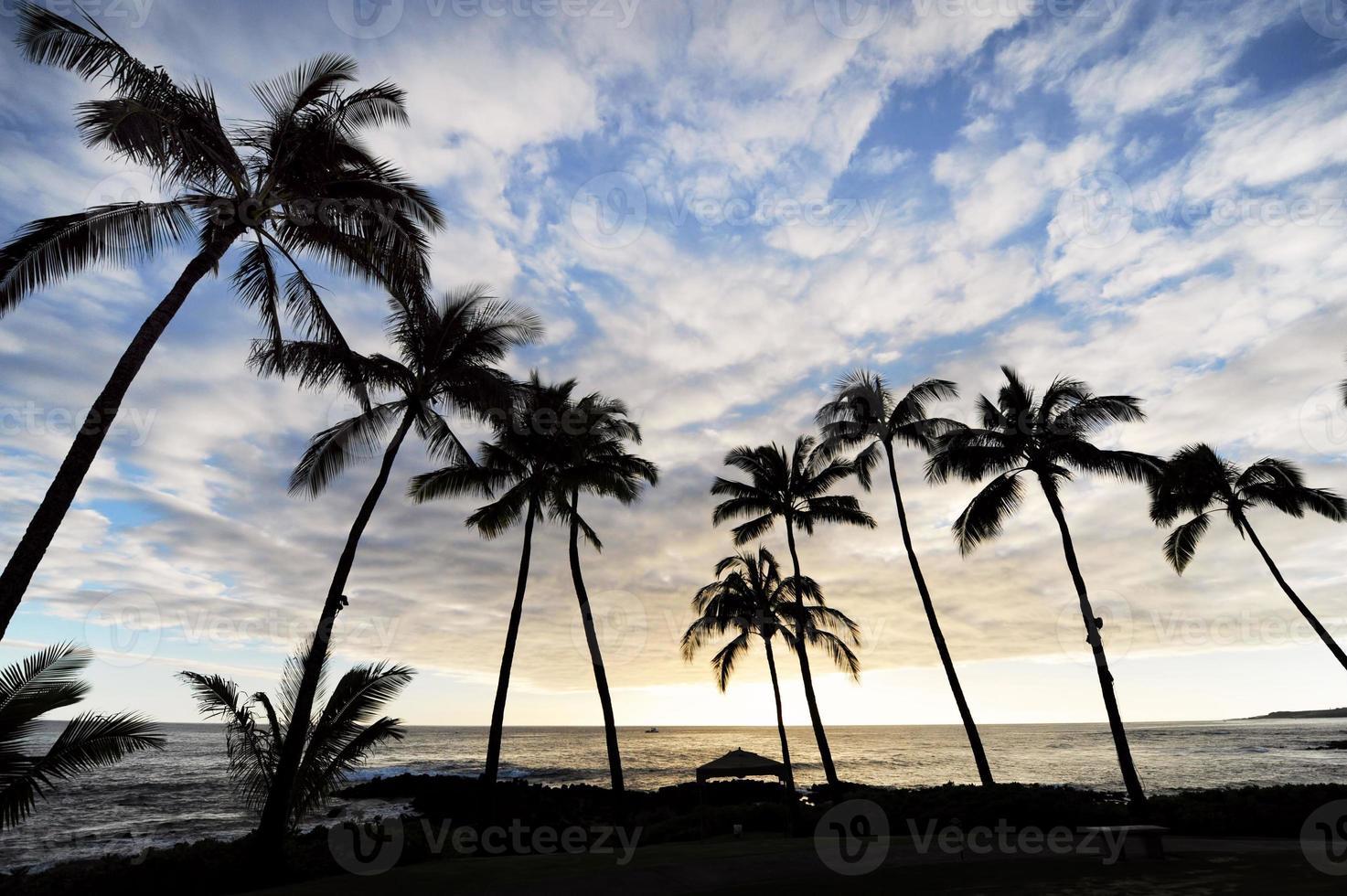Hawaii paradijs. foto