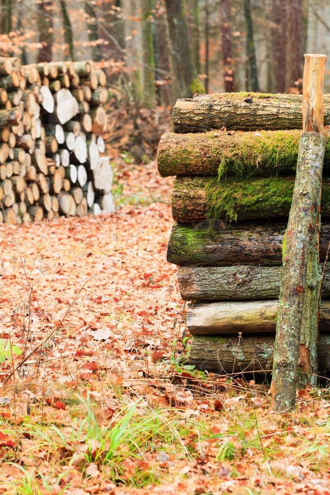 grote stapel hout in herfst bos foto