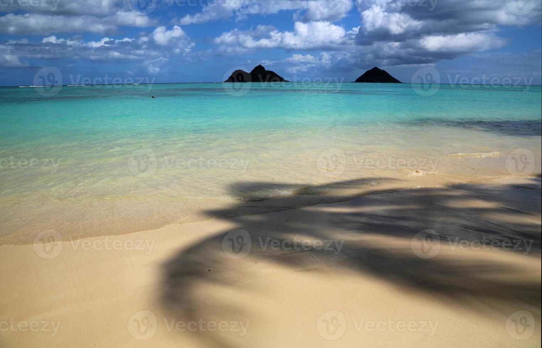onder palmboom op lanikai foto