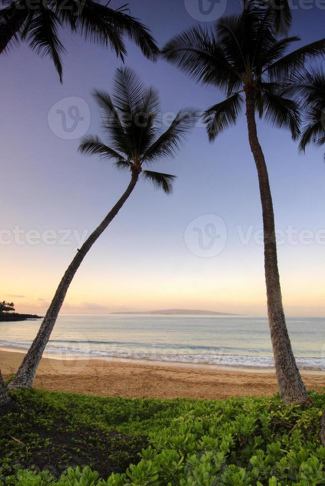 palmbomen bij zonsopgang op ulua beach, maui, hawaii foto