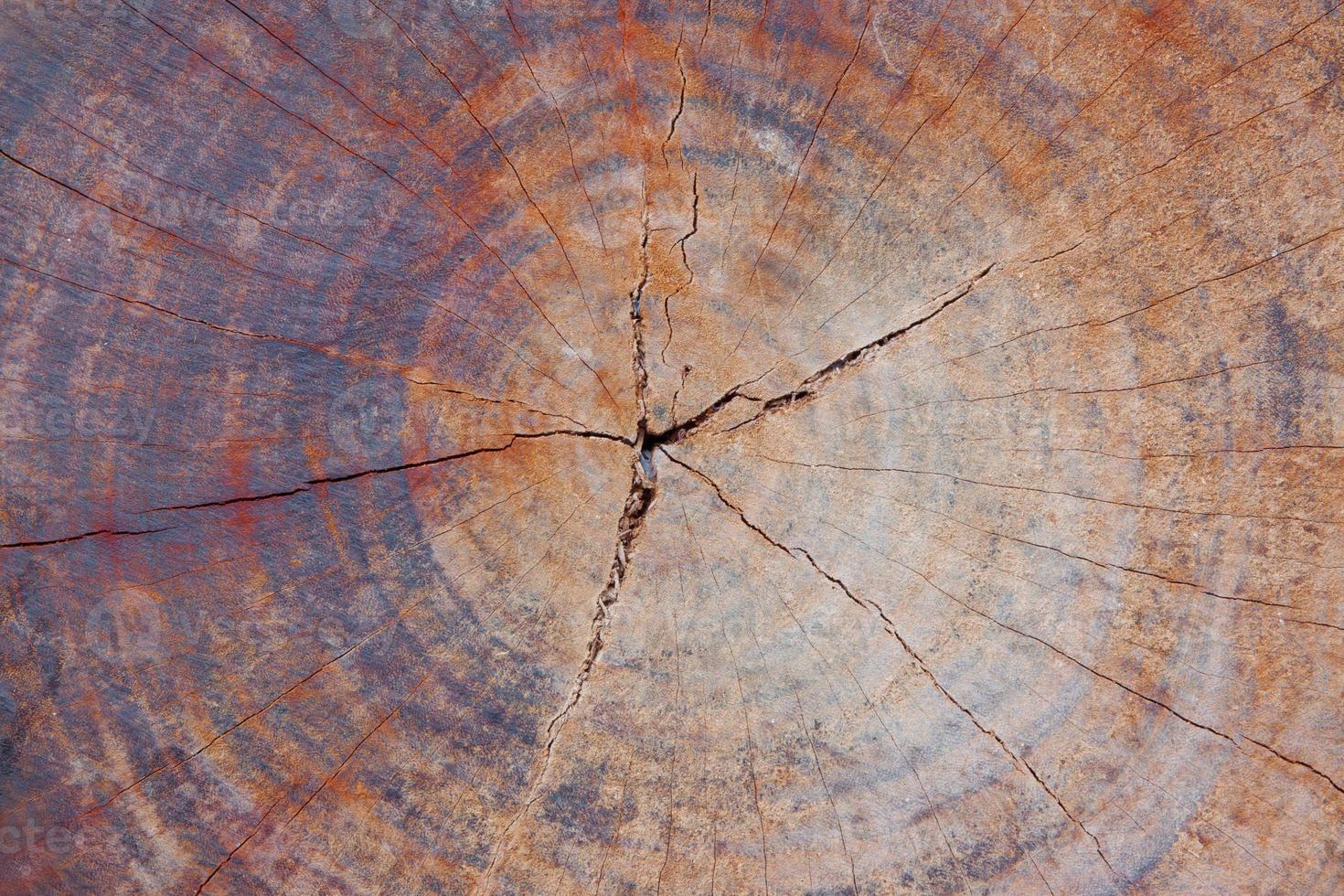 doorsnede log textuur foto