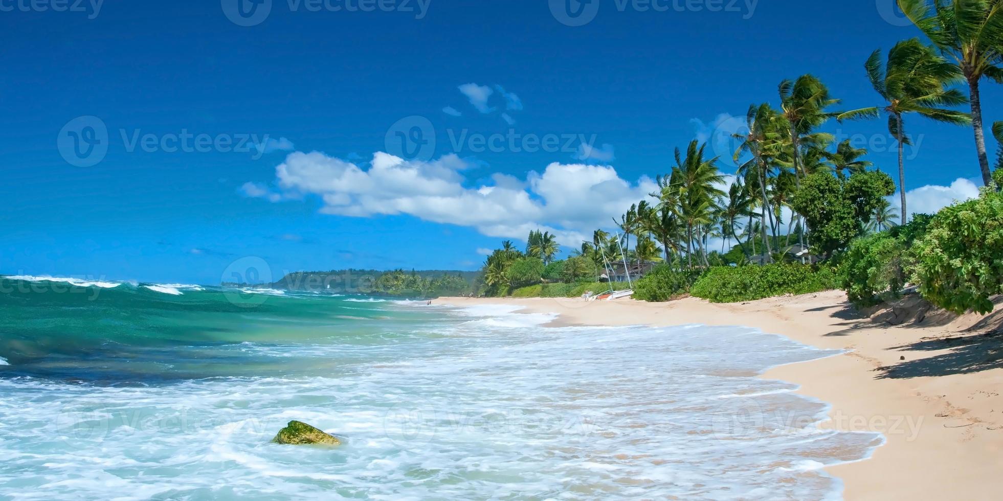 ongerept zandstrand met palmbomen en azuurblauwe oceaan panorama foto
