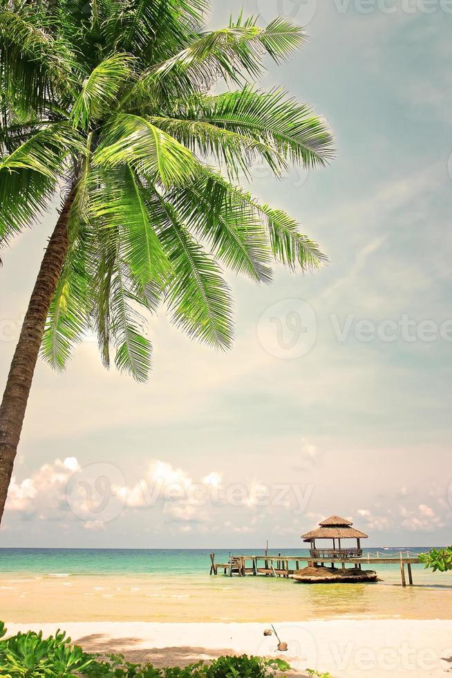 palmboom in tropische perfect strand foto