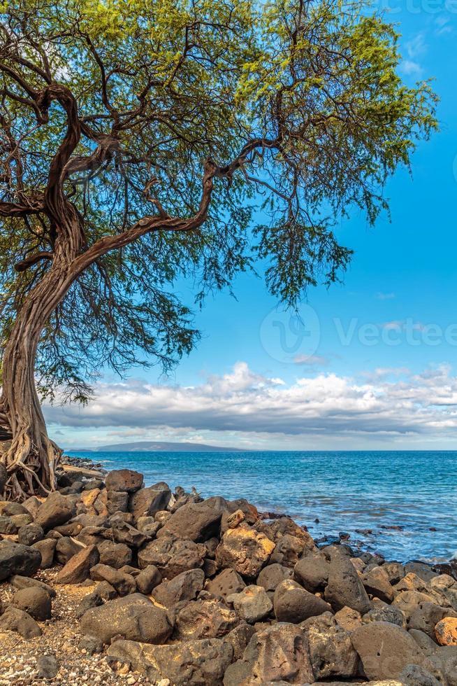 kihei kustlijn foto