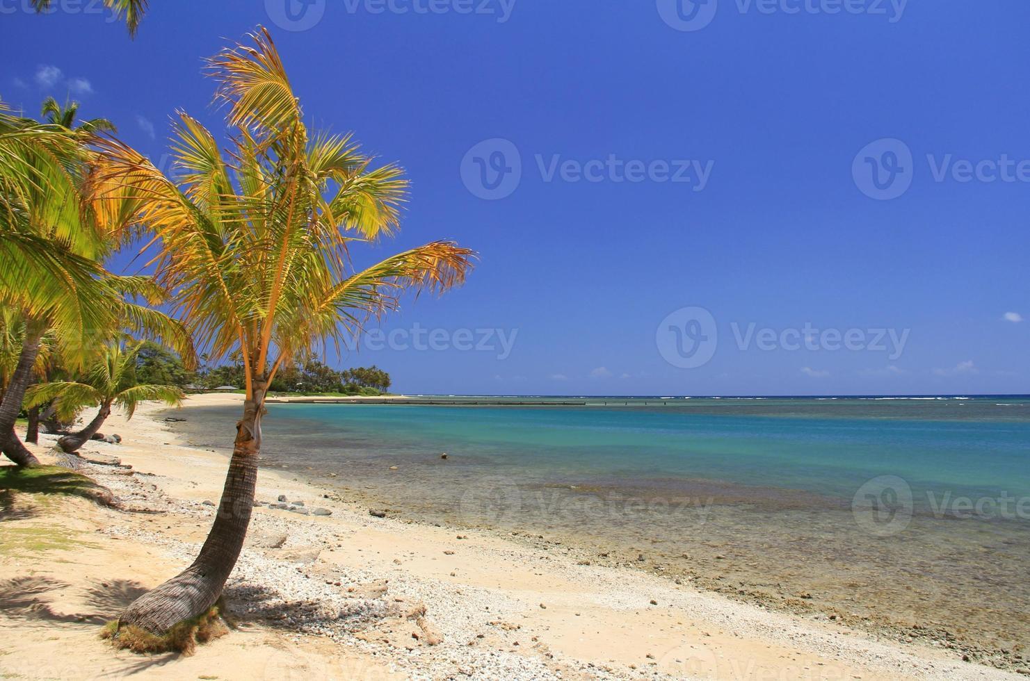 afgelegen oahu hawaii Stille Oceaan palmboom strand schilderachtig foto