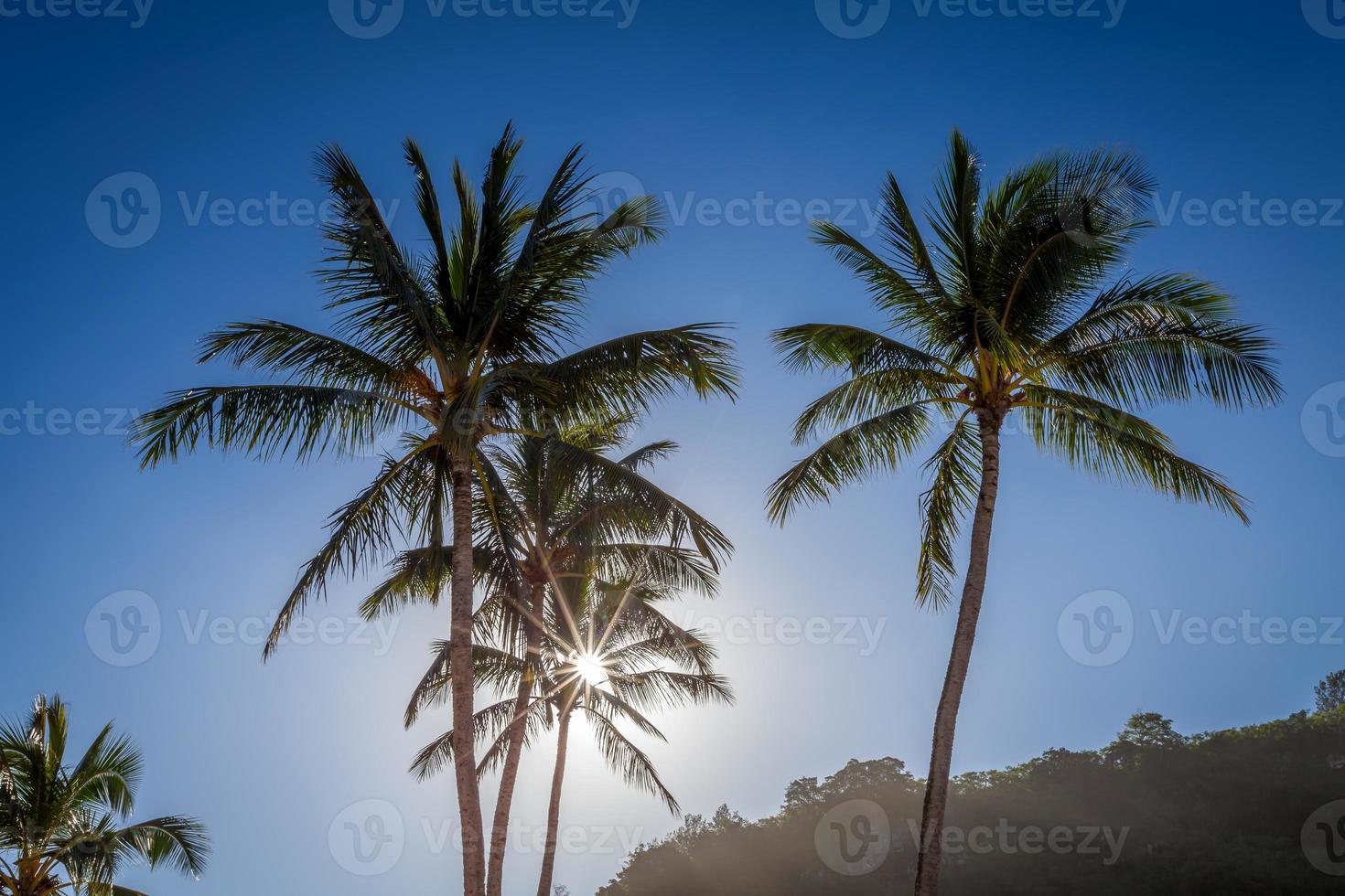 zon door de palmboom foto